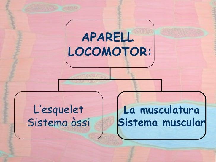 APARELL  LOCOMOTOR: L'esquelet Sistema òssi La musculatura Sistema muscular