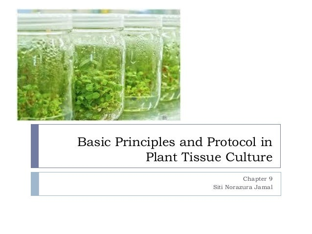 Basic Principles and Protocol in Plant Tissue Culture Chapter 9 Siti Norazura Jamal