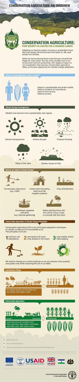 FAO - Infografia: Agricultura de conservación
