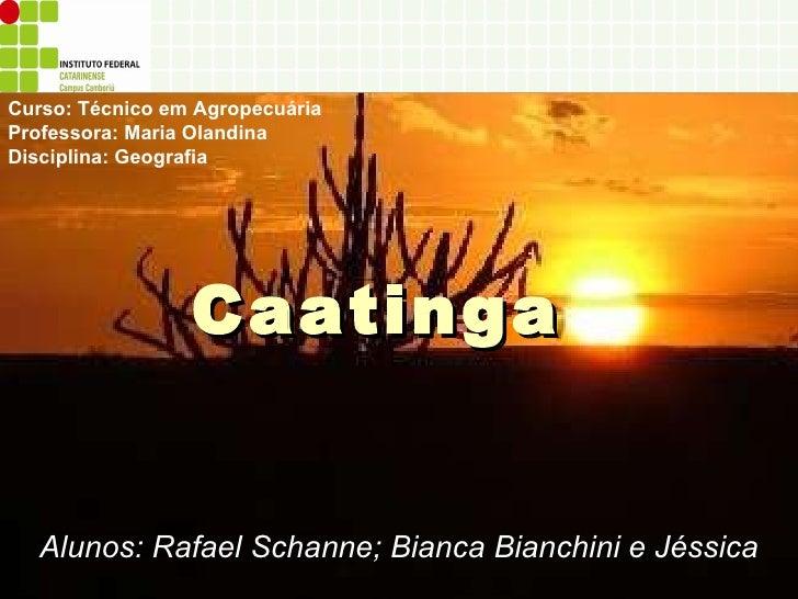 Caatinga Alunos: Rafael Schanne; Bianca Bianchini e Jéssica Curso: Técnico em Agropecuária Professora: Maria Olandina Disc...