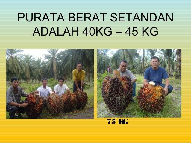 CASB baja organik & soil conditioner