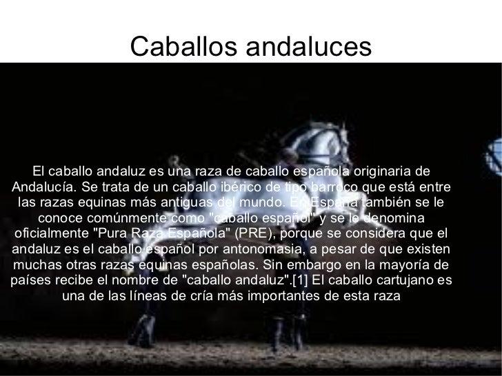 Caballos andaluces El caballo andaluz es una raza de caballo española originaria de Andalucía. Se trata de un caballo ibér...
