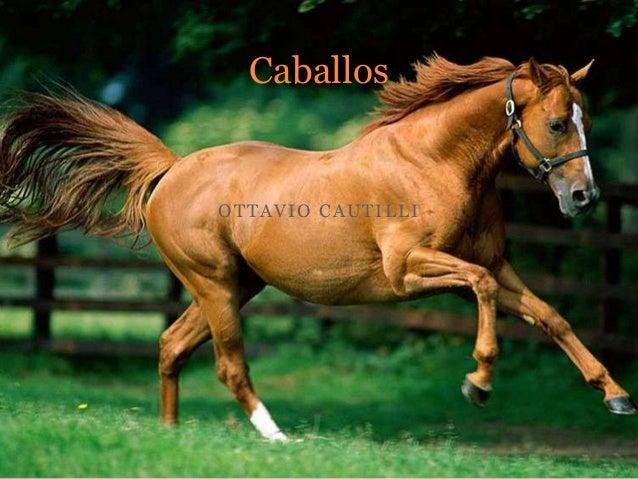 OTTAVIO CAUTILLI Caballos
