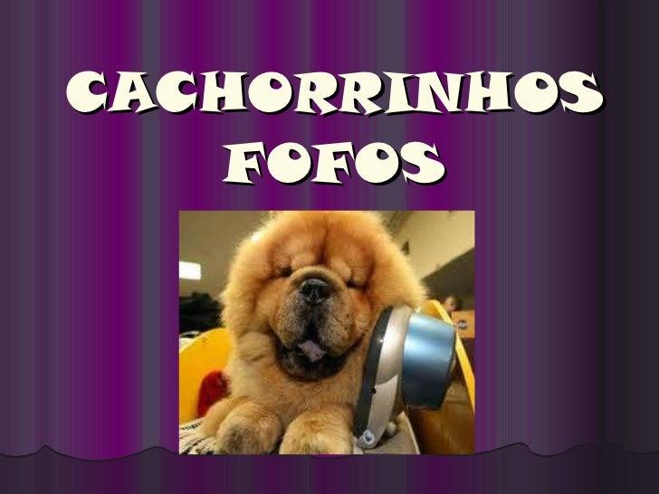 CACHORRINHOS FOFOS