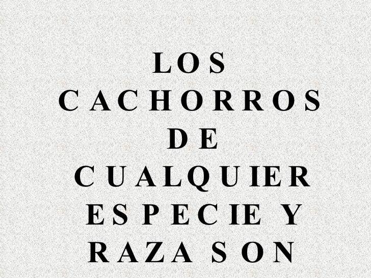 <ul><li>LOS CACHORROS DE CUALQUIER ESPECIE Y RAZA SON HERMOSOS </li></ul>
