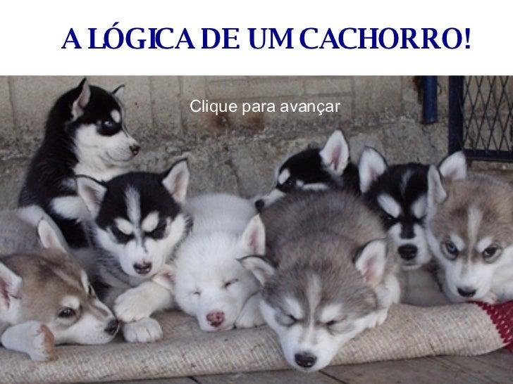 Cachorros7