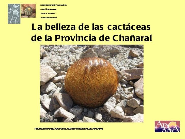"""La belleza de las cactáceas de la Provincia de Chañaral LICEO DIEGO DE ALMEIDA, EL SALVADOR III REGIÓN DE ATACAMA TALLER """"..."""