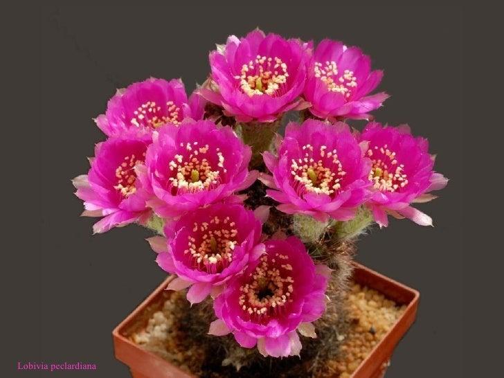 Bienvenidos al nuevo foro de apoyo a Noe #217 / 26.01.15 ~ 28.01.15 - Página 37 Cactus-26-728