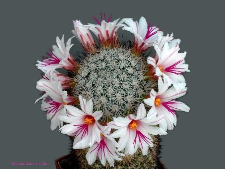 Bienvenidos al nuevo foro de apoyo a Noe #217 / 26.01.15 ~ 28.01.15 - Página 37 Cactus-27-728