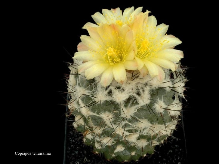 Bienvenidos al nuevo foro de apoyo a Noe #217 / 26.01.15 ~ 28.01.15 - Página 37 Cactus-28-728