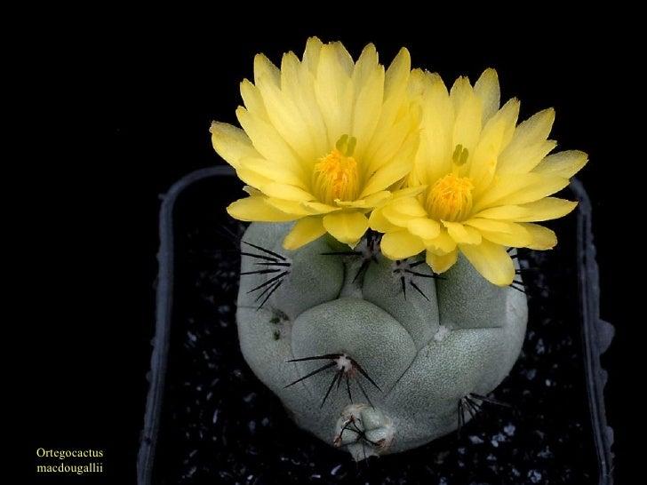 Bienvenidos al nuevo foro de apoyo a Noe #217 / 26.01.15 ~ 28.01.15 - Página 37 Cactus-29-728
