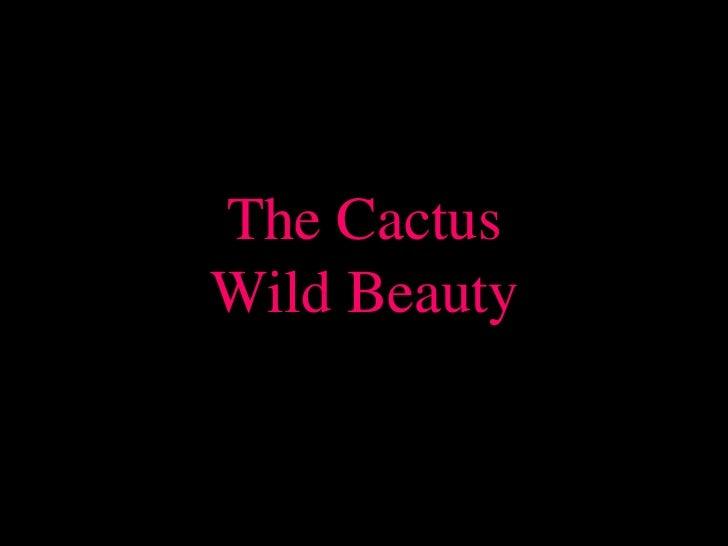 The CactusWild Beauty<br />