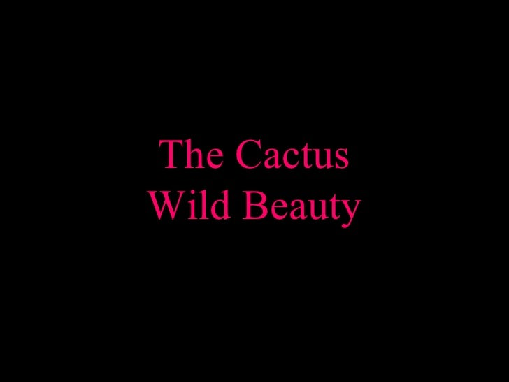 Cactus Beauty In Bloom