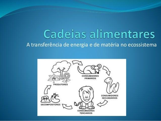 A transferência de energia e de matéria no ecossistema