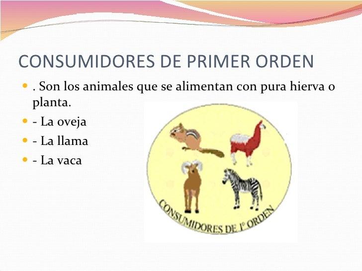 Cadena alimenticia for Cuales son los cajeros red