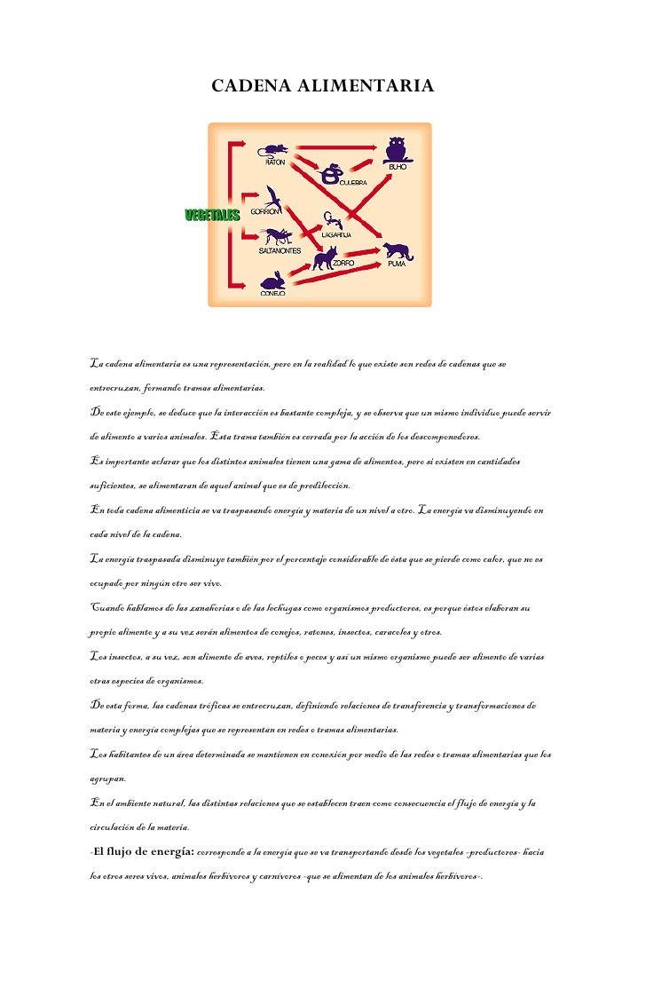 CADENA ALIMENTARIA     La cadena alimentaria es una representación, pero en la realidad lo que existe son redes de cadenas...