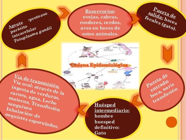 Cadena epidemiológica e historia natural de la