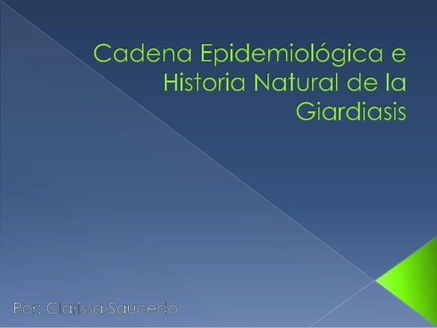    El agente es Giardia Duodenalis o    Giardia Lamblia