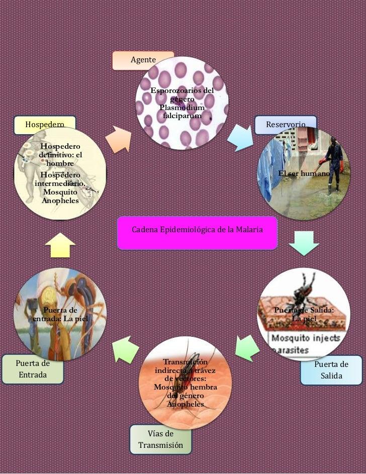 historia natural paludismo: