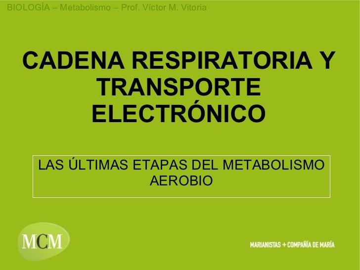 CADENA RESPIRATORIA Y TRANSPORTE ELECTRÓNICO LAS ÚLTIMAS ETAPAS DEL METABOLISMO AEROBIO