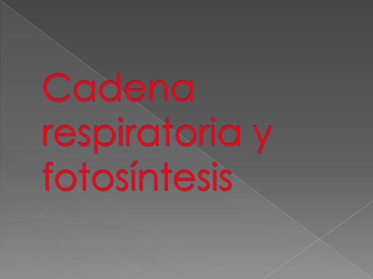 Cadena respiratoria y fotosíntesis