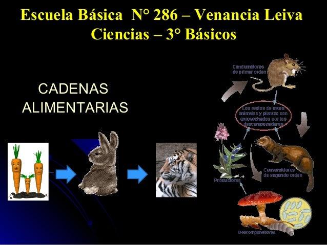 Escuela Básica N° 286 – Venancia Leiva Ciencias – 3° Básicos CADENAS ALIMENTARIAS