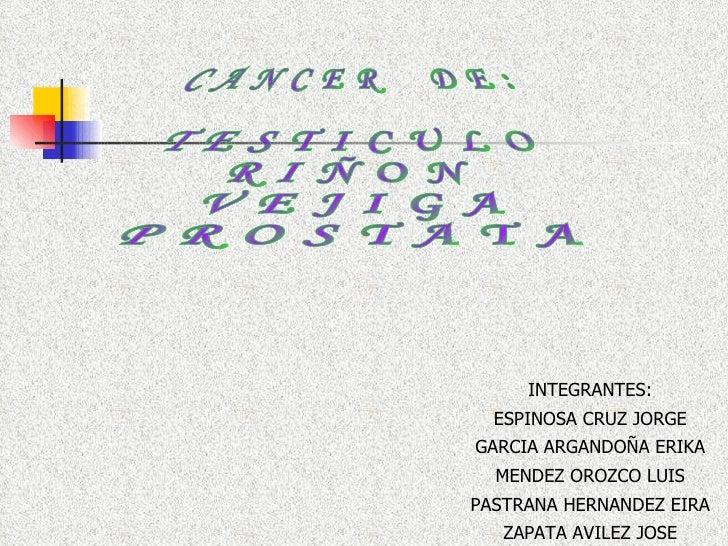 C A N C E R  D E : T E S T I C U L O R I Ñ O N V E J I G A P R O S T A T A INTEGRANTES: ESPINOSA CRUZ JORGE GARCIA ARGANDO...