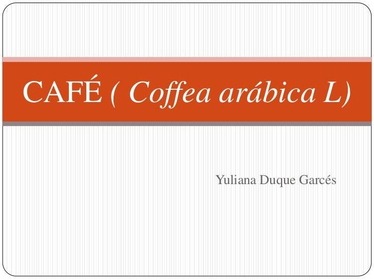 CAFÉ ( Coffea arábica L)              Yuliana Duque Garcés