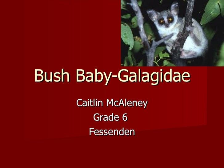 Bush Baby-Galagidae Caitlin McAleney Grade 6  Fessenden