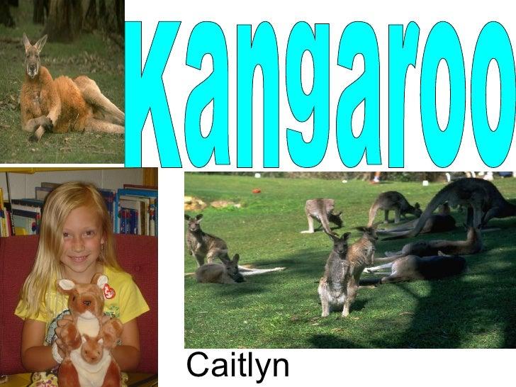 Kangaroo Caitlyn