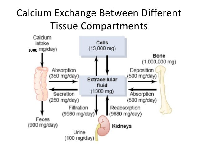Calcitonin recommendations