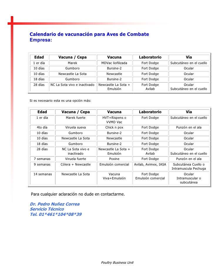 Calendario Gallos De Pelea