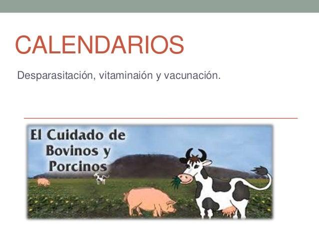 CALENDARIOSDesparasitación, vitaminaión y vacunación.