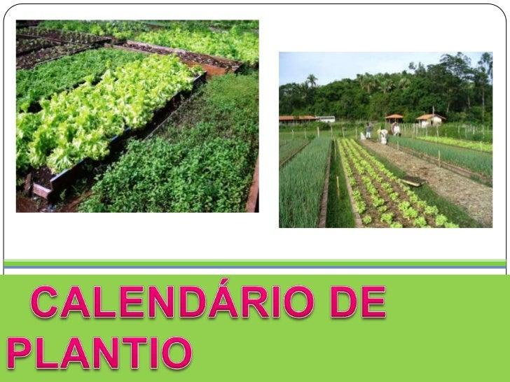CALENDÁRIO DE PLANTIO<br />