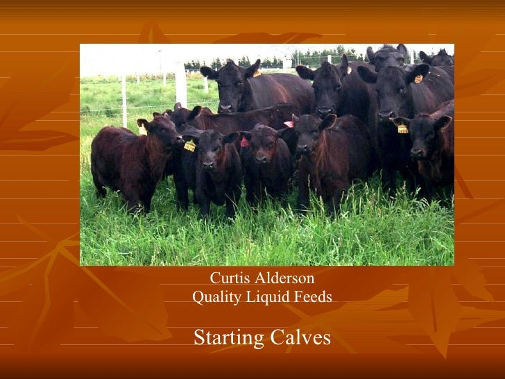 Calf Starter Qlf Presentation 08