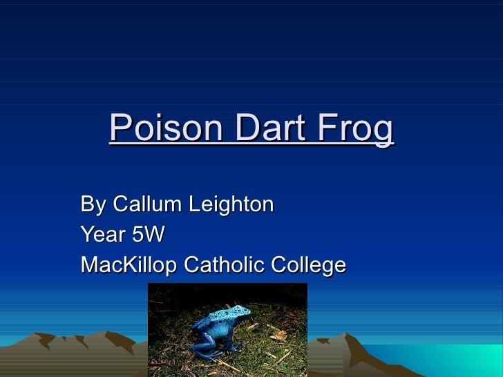 Poison Dart Frog By Callum Leighton Year 5W MacKillop Catholic College