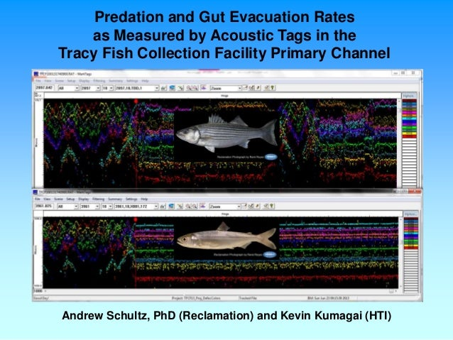 Predation and Gut Evacuation Rates as Measured by Acoustic Tags in the Tracy Fish Collection Facility Primary Channel Andr...