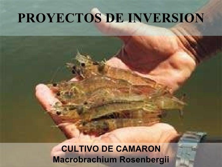 Camarones de agua dulce Bolivia