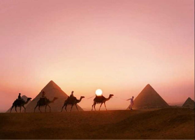 The Egyptian Camel