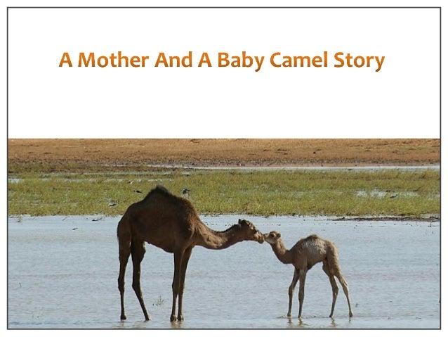 Camel Story