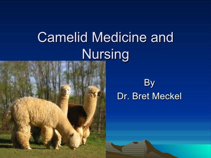 Camelid Medicine and Nursing By Dr. Bret Meckel