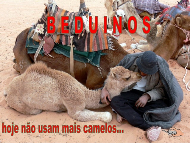 Camelos do Deserto