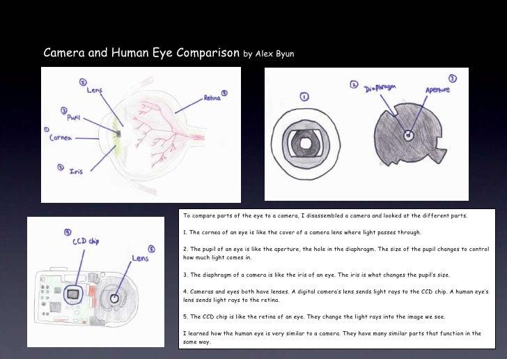 Camera and Eye Comparison