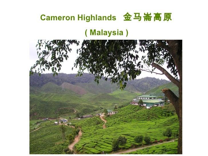Cameron Highlands, Malaysia  金马崙高原(马来西亚) Music :鹧鸪飞