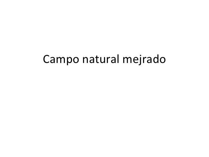 Campo natural mejrado