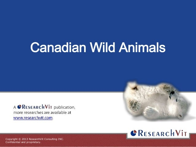 Canadian Wild Animals  Copyright © 2013 ResearchVit Consulting INC. Confidential and proprietary.