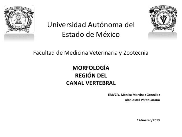 Canal Vertebral (UA Morfología Aplicada)