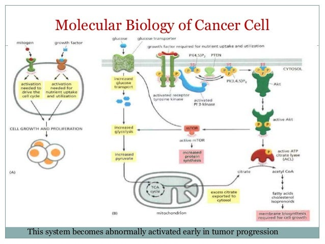 Essay on How Cancers Spread ? | Types | Diseases | Biology