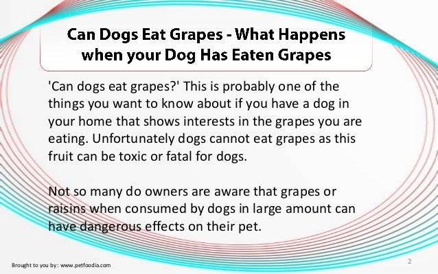 Can A Dog Eat Green Grapes