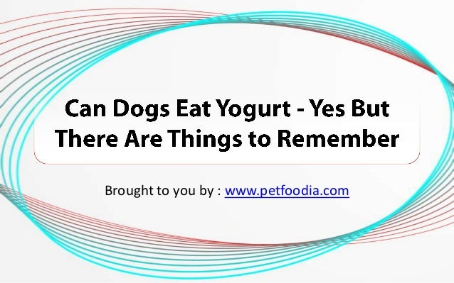 Can Dogs Eat Yogurt? - Yes But There Are Things to Remember